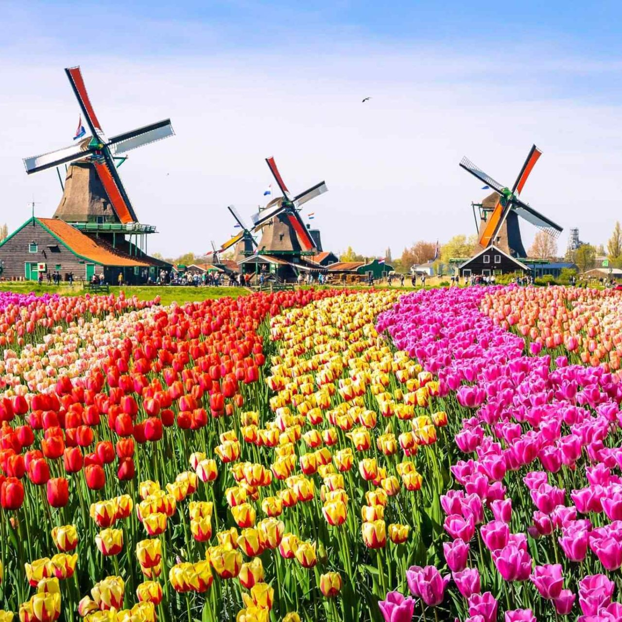 https://www.banitours.com/wp-content/uploads/2018/09/destination-netherlands-01-1280x1280.jpg